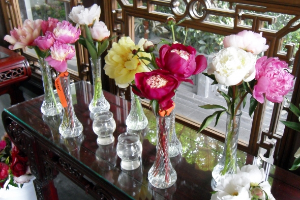 Peony Display from the Pacific Northwest Peony Society