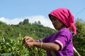 Travels on the Tea Road with The Tao of Tea